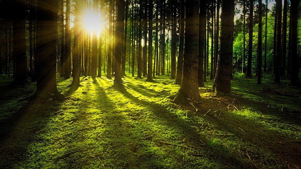Ausblicke in unseren Wald von morgen