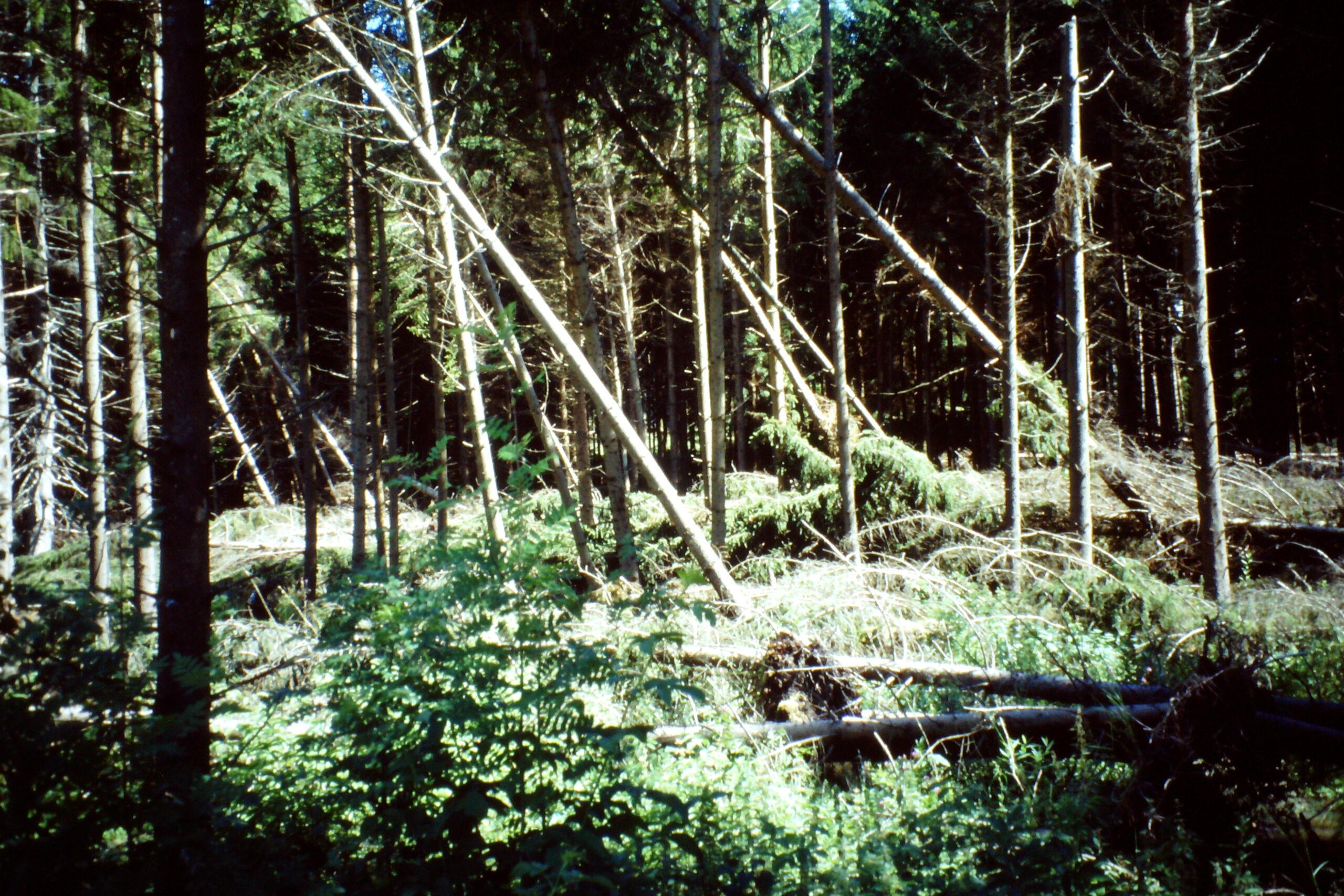 Zukunftsfähiger Wald